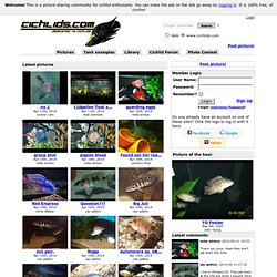 cichlids.com: dedicated to cichlids