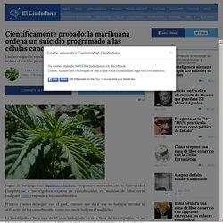Científicamente probado: la marihuana ordena un suicidio programado a las células cancerosas