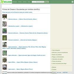 Fichas de crasas por nombre científico desde Adenium a Euphorbia (1)
