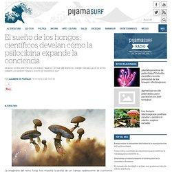 El sueño de los hongos: científicos develan cómo la psilocibina expande la conciencia « Pijamasurf - Noticias e Información alternativa