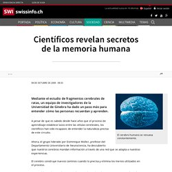 Científicos revelan secretos de la memoria humana