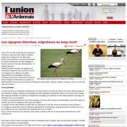 Les cigognes blanches, migrateurs au long court