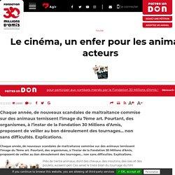 Le cinéma, un enfer pour les animaux acteurs