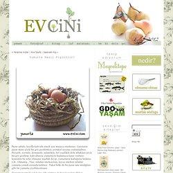 Ev Cini: Yumurta Nasıl Pişirilir?