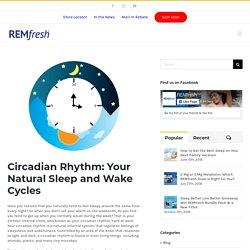 Circadian Rhythm: Your Natural Sleep and Wake Cycles