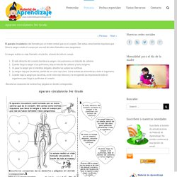 Aparato circulatorio 3er Grado - Material de Aprendizaje