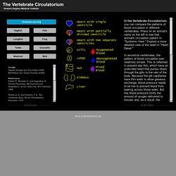 The Vertebrate Circulatorium