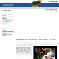CISR: Red Palm Weevil