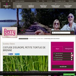 Cistude d'Europe, petite tortue de Brenne - Grandeur Nature - L'essentiel du Berry