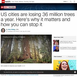 US cities are losing 36 million trees a year. Here's why it matters and how you can stop it