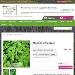 Mélisse officinale ou citronnelle, Melissa officinalis, Arom'antique.
