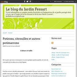 Potirons, citrouilles et autres potimarrons - Le blog du Jardin Fessart