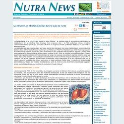 La citrulline, un rôle fondamental dans le cycle de l'urée - Acides aminés