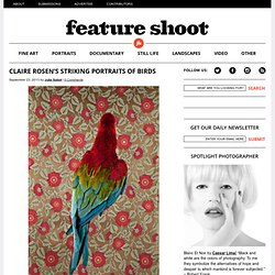 Claire Rosen's Striking Portraits of Birds
