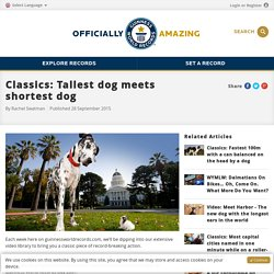 Classics: Tallest dog meets shortest dog