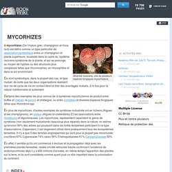 Mycorhizes. Les premières études, la classification, Arbusculaires mycorhizes
