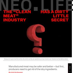 """The """"Clean Meat"""" Industry Has a Dirty Little Secret - NEO.LIFE"""