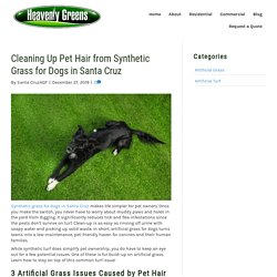 How to Clean Pet Hair from Synthetic Grass for Dogs in Santa Cruz