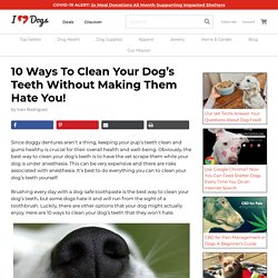 10 Ways To Clean Your Dog's Teeth Without Making Them Hate You!