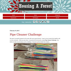 Pipe Cleaner ChallengeHousing a Forest