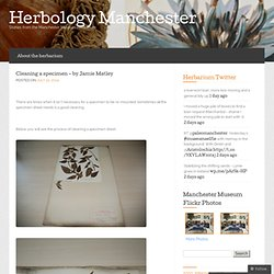 Cleaning a specimen – by Jamie Matley « Herbology Manchester