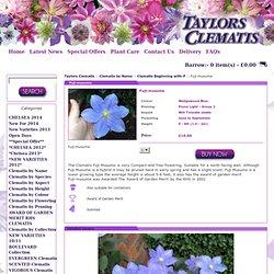 Clematis Fuji-musume - Taylors Clematis