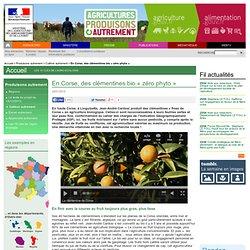 ALIMENTATION_GOUV_FR 22/01/14 En Corse, des clémentines bio « zéro phyto »