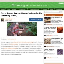 Clever Tunnel System Makes Chickens Do The Gardening (Video)