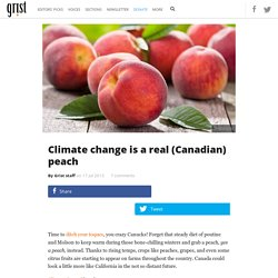 Climate change is a real (Canadian) peach