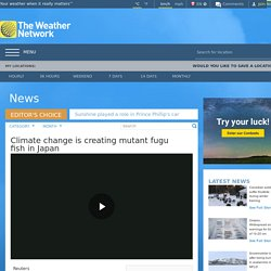 REUTERS 10/12/18 Climate change is creating mutant fugu fish in Japan