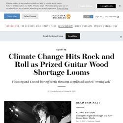SCIENTIFIC AMERICAN 28/10/20 Climate Change Hits Rock and Roll as Prized Guitar Wood Shortage Looms