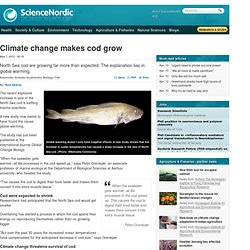 Climate change makes cod grow
