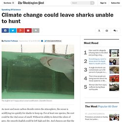 Climate change could leave sharks unable to hunt