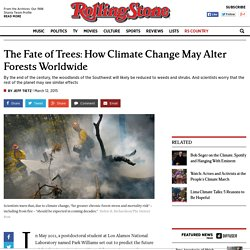 The Fate of Trees: How Climate Change May Alter Forests Worldwide
