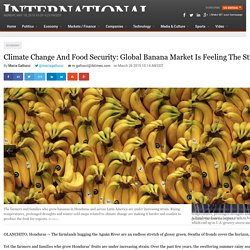 IBTIMES 26/03/15 Climate Change And Food Security: Global Banana Market Is Feeling The Strain Of Hotter Weather, Longer Droughts