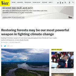 Climate change solutions: forest restoration might be the single best way to fight climate chage