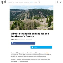 Climate change is coming for the Southwest's forests