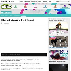 Why cat clips rule the internet - CBBC Newsround