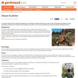 P cher fruitier pearltrees - Cloque du pecher traitement naturel ...