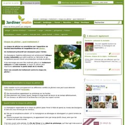 La cloque du p cher pearltrees - Cloque du pecher traitement naturel ...