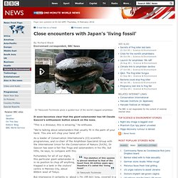 Close encounters with Japan's 'living fossil'
