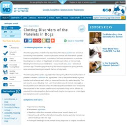 Clotting Disorders of the Platelets in Dogs