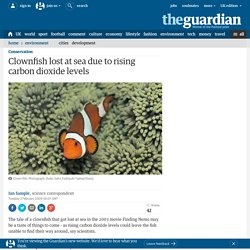 Clownfish lost at sea due to rising carbon dioxide levels