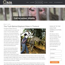 AFA Coalition - The Truth Behind Elephant Rides in Thailand
