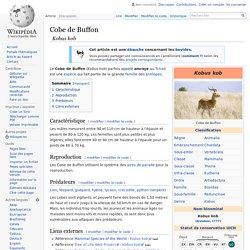 Cobe de Buffon