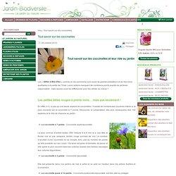 Tout savoir sur les coccinelles et leur rôle au jardin