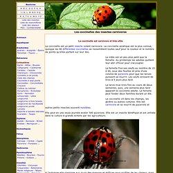 Les coccinelles, insectes carnivores utiles