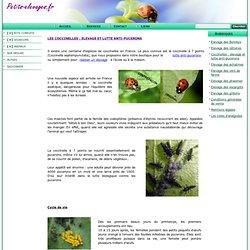Coccinelles : élevage et lutte anti-pucerons www.petits-elevages.fr