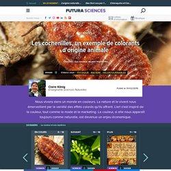 Les cochenilles, un exemple de colorants d'origine animale