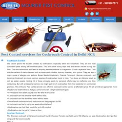 Cockroach Control Services in India